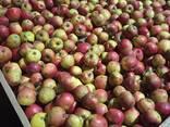 Яблоко для переработки, промпереработки(опад) оптом. - фото 4