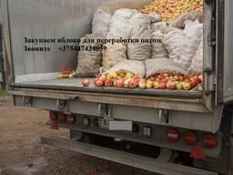 Яблоко для переработки, промпереработки(опад) оптом.