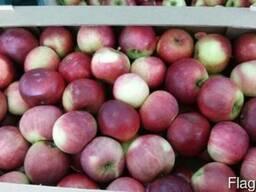 Яблоко сезонное