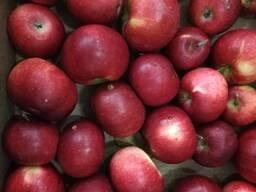 Яблоко свежее первого сорта