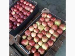 Яблоко ЖЕНЕВА 2-го сорта