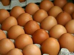 Яйца куриные оптом с доставкой в Москву.