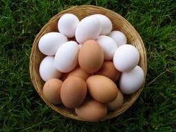 Куплю яйцо куриное, С-1, С-2, С-О, С-В