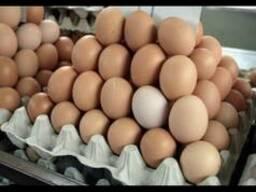 Продаем Яйцо куриное на постоянной основе. Белорусских