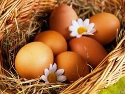Яйцо куриное цветное