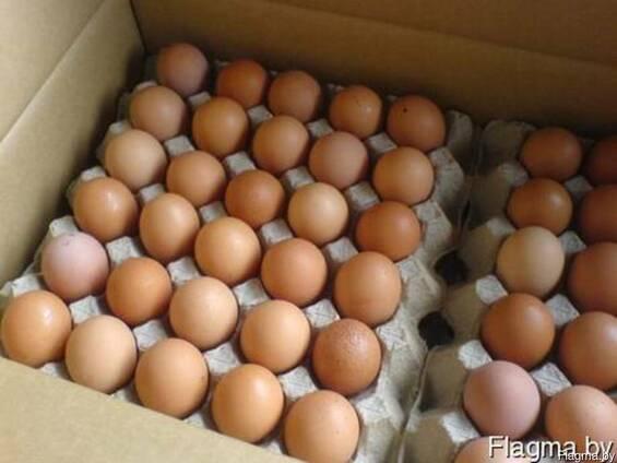 Яйцо куриное Д0, С0 цветное
