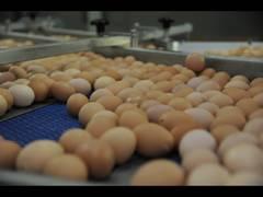 Яйцо куриное С-1, С-2, С-0, С-В
