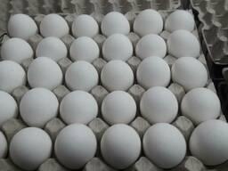 Яйцо куриное С1, С2