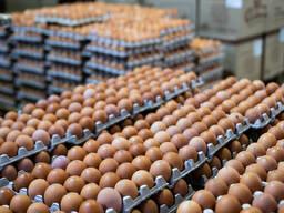 Яйцо куриное С-1 С-2 С-0