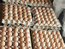 Яйцо с1 55-65г - 40р/десяток