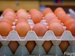 Яйцо С1 цветное.