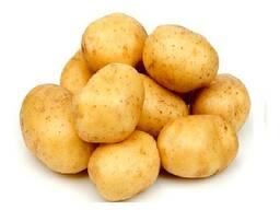 Закупаем картофель оптом