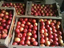 Закупаем яблоко