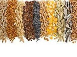 Закупаем ячмень, тритикале, пшеницу, зерносмесь