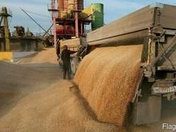 Закупаем зерно фуражное/продовольственное!Звоните!