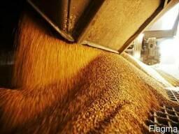 Зерно фуражное(пшеница, ячмень, овес)