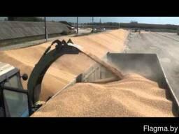 Перевозка сыпучих грузов Перевозка зерна
