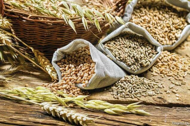 Закупаем зерно (кукуруза, пшеница, ячмень)