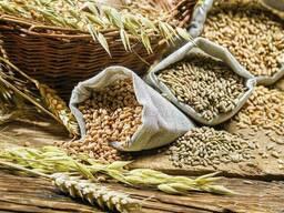 Зерно (тритикале, рожь, овес, пшеница, кукурузу)