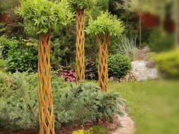 Живые плетеные деревья